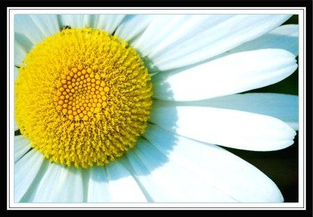 flowerframedshrp11x14printweb